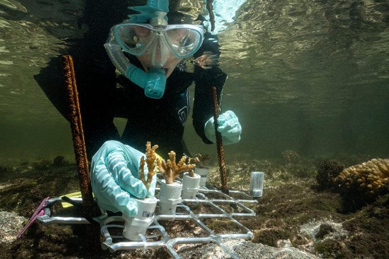 Coral-Nurture-IMG2