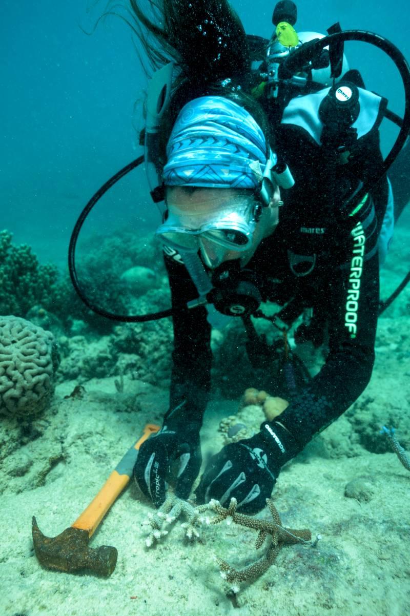 Coral Nurture Program IMG 1